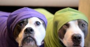 perros-y-sus-cuidados-en-tiempos-de-frio_4ijl0