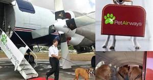 pet-airways-lo-mejor-para-las-mascotas_o6w2e