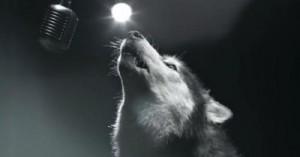 podrian-ser-heroes-perros-cantando-contra-el-cancer_e4tu3