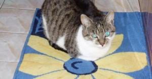 por-que-a-los-gatos-les-fascinan-los-cuartos-de-bano_wj5gl