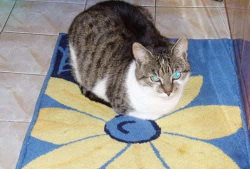 ¿Por qué a los gatos les fascinan los cuartos de baño?