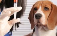 por-que-es-importante-la-vacunacion-de-los-perros_ji76u