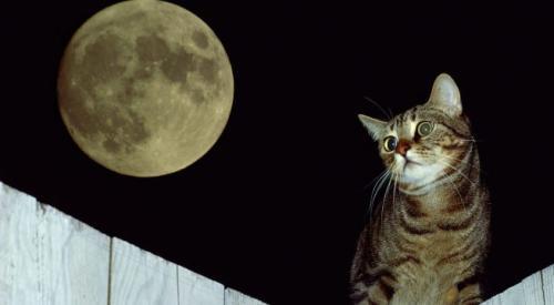 ¿Por qué los gatos pasan las noches despiertos?