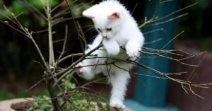 por-que-los-gatos-suben-a-lugares-altos_st6z8