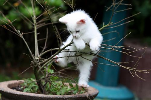 ¿Por qué los gatos suben a lugares altos?