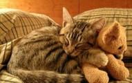 porque-los-gatos-ronronean_i8rmh