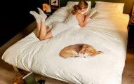 porque-los-perros-quieren-dormir-en-la-cama-de-los-amos_uef06
