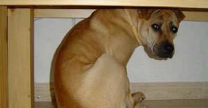 porque-los-perros-tienen-miedo-a-las-tormentas_68ew9