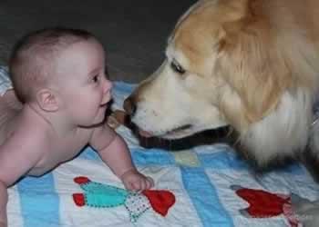 Preparando al perro para la llegada del bebé a casa
