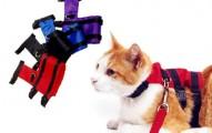 pretales-para-gatos_re5vh