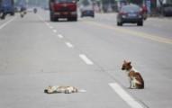 primeros-auxilios-en-caso-de-accidente-con-perros-y-gatos_5vmd7