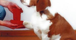 primeros-auxilios-para-nuestra-mascota_hx5bm