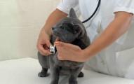 primeros-auxilios-para-que-las-heridas-de-tu-gato-no-empeoren_y4fxt