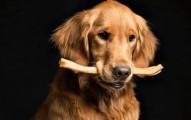 probioticos-y-sus-bondades-para-el-perro_8a21n
