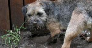 problemas-de-un-perro-que-pasa-demasiado-tiempo-en-la-terraza-o-el-jardin_8b4av