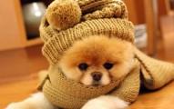 protege-a-tu-mascota-en-los-dias-frios_dm092