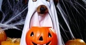 protege-a-tu-perro-durante-las-fiestas-de-halloween_wfrhq