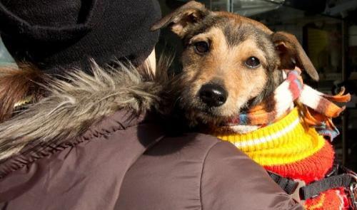 ¿Por qué abrigar a los perros cuando hace frío?