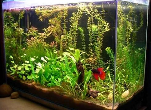 Qu acuario debo elegir para mis peces canal mascotas for Peces para acuario