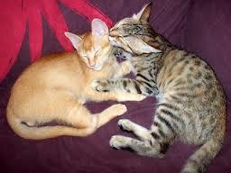 que-hacer-ante-la-llegada-de-un-nuevo-gato-a-casa_41pq7