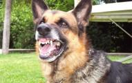 que-hacer-con-un-perro-agresivo_i2t8h