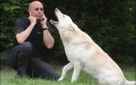 que-hago-para-que-mi-perro-no-ladre-excesivamente_z9atv