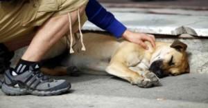 que-hago-si-mi-perro-esta-envenenado_ubkrd