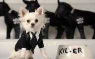que-nombre-elijo-para-mi-perro_hurjn