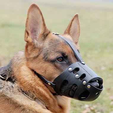 ¿Qué perros deben usar collar?