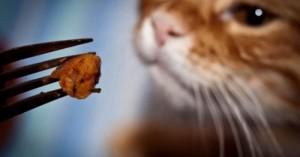 que-pueden-comer-los-gatos-para-una-mejor-salud_f5wt0