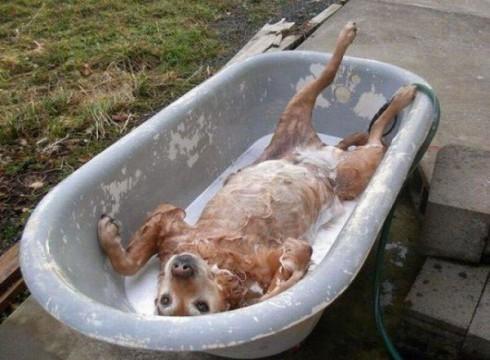 Qu tan seguido puedo ba ar a mi perro canal mascotas - Como banar a un perro ...