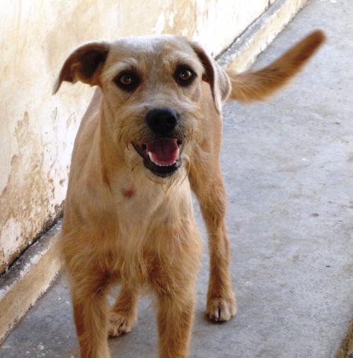 Quiero ayudar a las mascotas y perros abandonados ¿cómo puedo hacerlo?