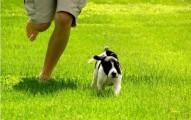 razas-de-perros-con-mucha-energia-para-los-duenos-activos_j8q3h