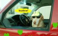 recomendaciones-para-viajar-en-taxi-con-la-mascota_50gpw