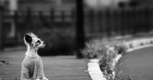 reflexiones-sobre-el-abandono-de-mascotas-y-los-duenos-sin-compromiso_fhre7