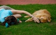 reflexiones-sobre-la-importancia-de-la-libertad-y-la-felicidad-de-las-mascotas_59hym