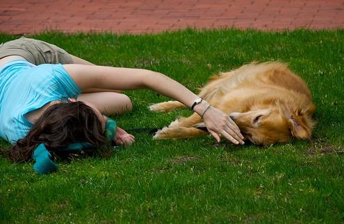 Reflexiones sobre la importancia de la libertad y la felicidad de las mascotas