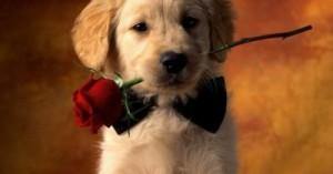 regalar-mascotas-en-san-valentin_fhukl