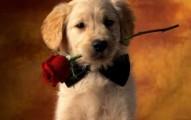 regalar-perros-y-otras-mascotas-en-san-valentin_ph1iv