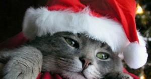 regalar-una-mascota-por-navidad_7gl1h