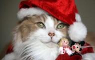 regalos-de-navidad-para-gatos_z1icg