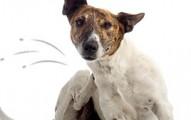 remedios-caseros-para-tener-una-mascota-libre-de-parasitos_w1vr7