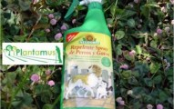 repelentes-naturales-para-desparasitar-a-los-gatos_hxe5w