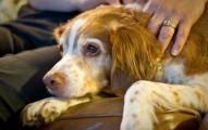 sacrificar-a-tu-perro-cuando-sufrira-toda-la-vida_is21z