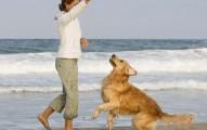 salidas-del-perro-para-hacer-sus-necesidades_45fdv