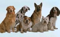secretos-de-los-perros_yblpu