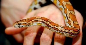 serpientes-mascotas-para-ninos_qblf1