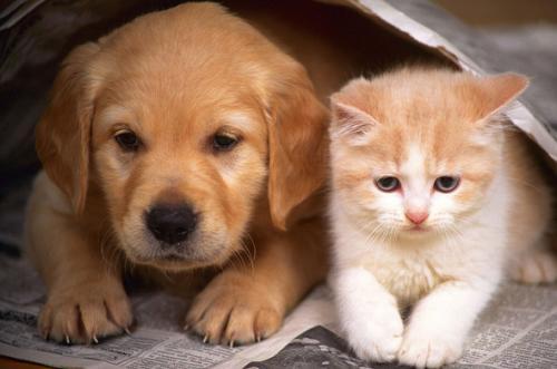 Sobre la tristeza de perder a una mascota