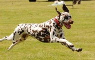 soluciones-a-los-perros-hiperactivos_2hulq