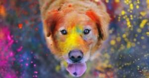 tener-un-perro-desventajas-y-responsabilidad_naljy
